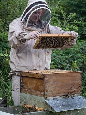 Beekeeper in Ceredigion / Cardiganshire West Wales